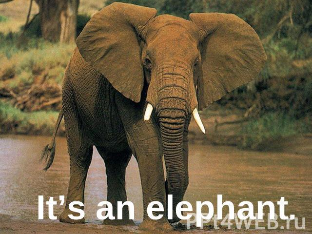 It's an elephant.