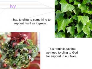 Ivy It has to cling to something to support itself as it grows. This reminds us