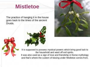 Mistletoe The practice of hanging it in the house goes back to the times of the