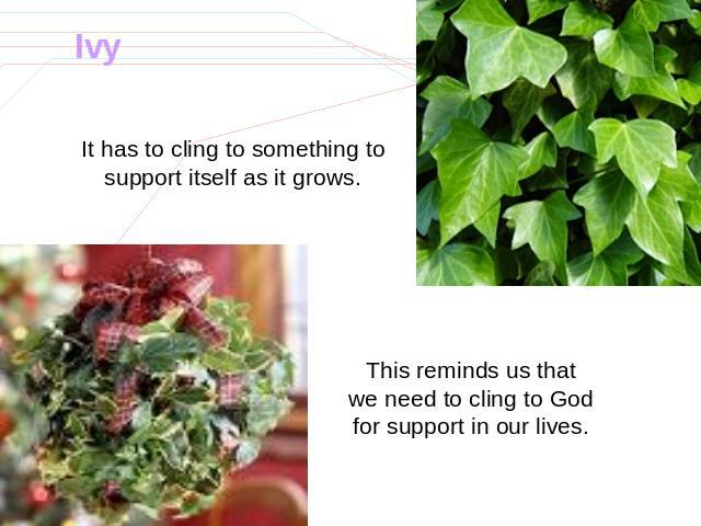 Ivy It has to cling to something to support itself as it grows. This reminds us that we need to cling to God for support in our lives.