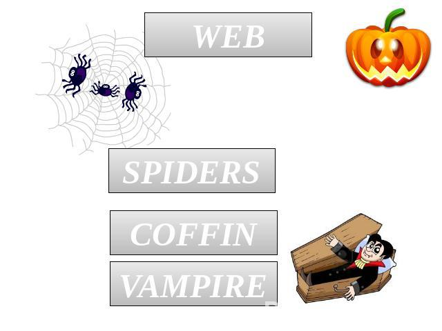 WEB SPIDERS COFFIN VAMPIRE
