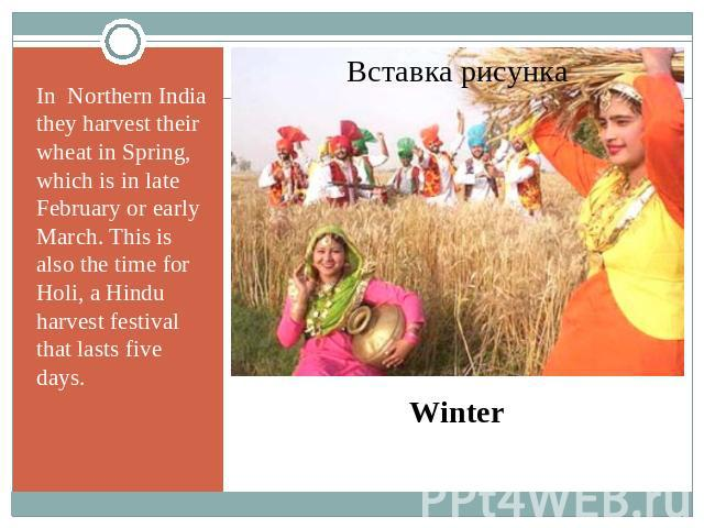 In Northern India they harvest their wheat in Spring, which is in late February or early March. This is also the time for Holi, a Hindu harvest festival that lasts five days. Winter