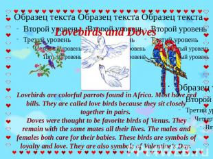 Lovebirds and Doves Lovebirds are colorful parrots found in Africa. Most have re