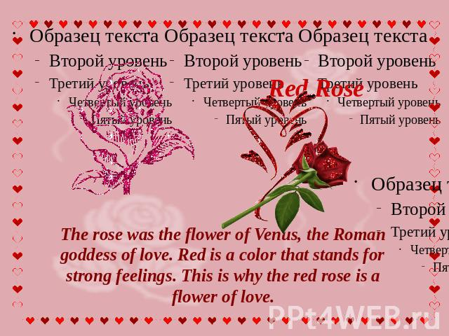 Red Rose The rose was the flower of Venus, the Roman goddess of love. Red is a color that stands for strong feelings. This is why the red rose is a flower of love.