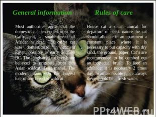 General informationMost authorities agree that the domestic cat descended from t