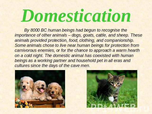 Domestication By 8000 BC human beings had begun to recognise the importance of other animals – dogs, goats, cattle, and sheep. These animals provided protection, food, clothing, and companionship. Some animals chose to live near human beings for pro…