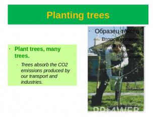 Planting trees Plant trees, many trees.Trees absorb the CO2 emissions produced b