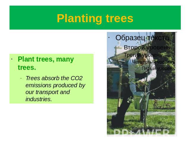 Planting trees Plant trees, many trees.Trees absorb the CO2 emissions produced by our transport and industries.