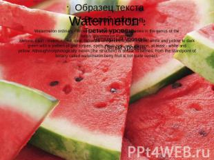 Watermelon .Watermelon ordinary - an annual herbaceous plant species in the genu