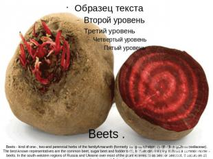 Beets .Beets - kind of one-, two-and perennial herbs of the familyAmaranth (form