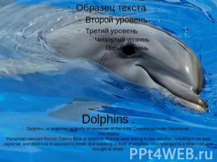 Dolphins .Dolphins, or dolphins - a family of mammals of the order Cetacea,subor