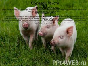 Pig.Swine - family nezhvachnyh artiodactyls, which includes eightspecies, includ
