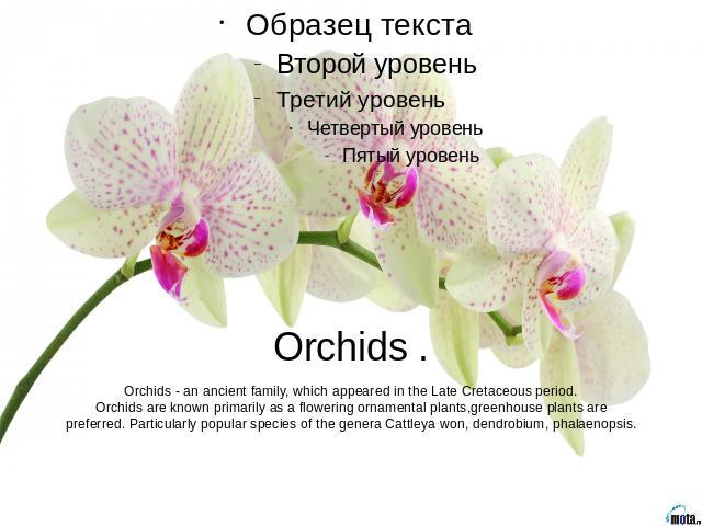 Orchids .Orchids - an ancient family, which appeared in the Late Cretaceous period.Orchids are known primarily as a flowering ornamental plants,greenhouse plants are preferred. Particularly popular species of the genera Cattleya won, dendrobium, pha…