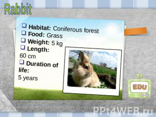Rabbit Habitat: Coniferous forest Food: Grass Weight: 5 kg Length: 60 cm Duratio