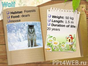 Wolf Habitat: Forests Food: dears moose Weight: 50 kg Length: 1.5 m Duration of