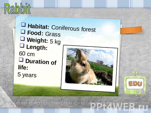 Rabbit Habitat: Coniferous forest Food: Grass Weight: 5 kg Length: 60 cm Duration of life: 5 years