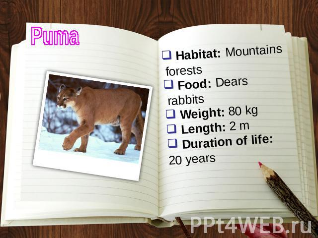Puma Habitat: Mountains forests Food: Dears rabbits Weight: 80 kg Length: 2 m Duration of life: 20 years