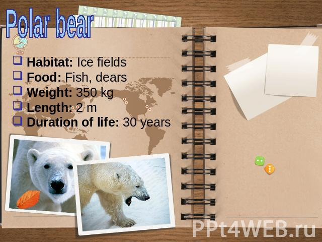 Polar bear Habitat: Ice fields Food: Fish, dears Weight: 350 kg Length: 2 m Duration of life: 30 years