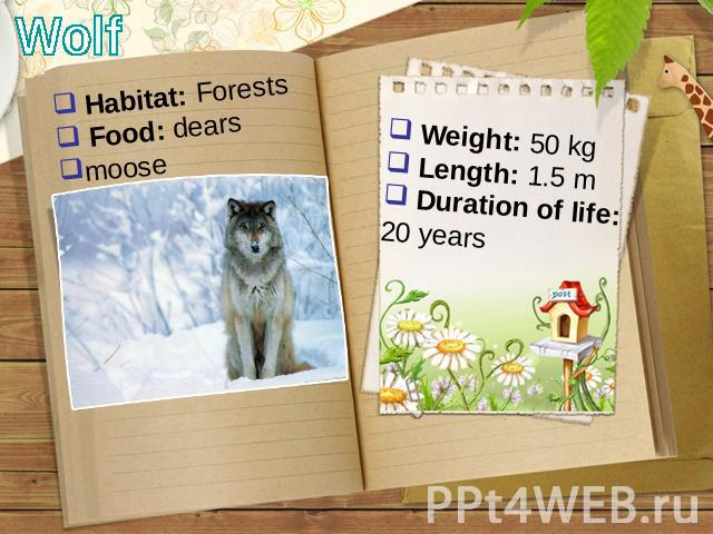 Wolf Habitat: Forests Food: dears moose Weight: 50 kg Length: 1.5 m Duration of life: 20 years