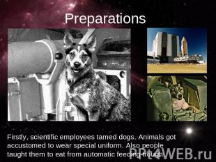PreparationsFirstly, scientific employees tamed dogs. Animals got accustomed to