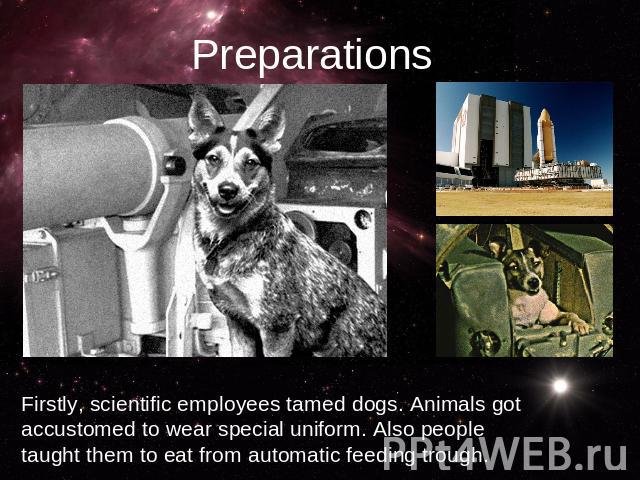 PreparationsFirstly, scientific employees tamed dogs. Animals got accustomed to wear special uniform. Also people taught them to eat from automatic feeding trough.