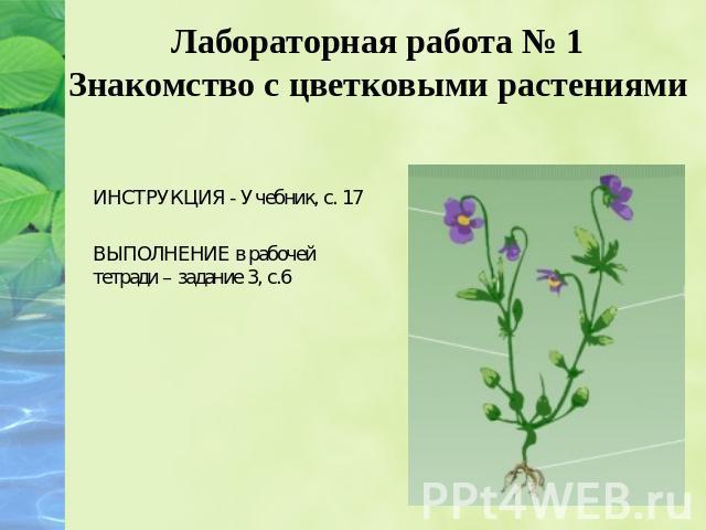 биология 6 класс лабораторная работа 1 знакомство с цветковыми растениями
