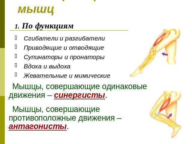 выбрать духи дайте определения мимическим мышцам ним подходят цитрусовые