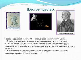 Шестое чувство. Lazzaro Spallanzani (1729-1799) – итальянский биолог и натуралис