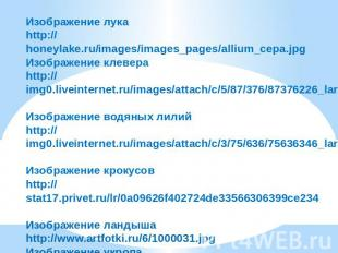 Изображение лука http://honeylake.ru/images/images_pages/allium_cepa.jpg Изображ