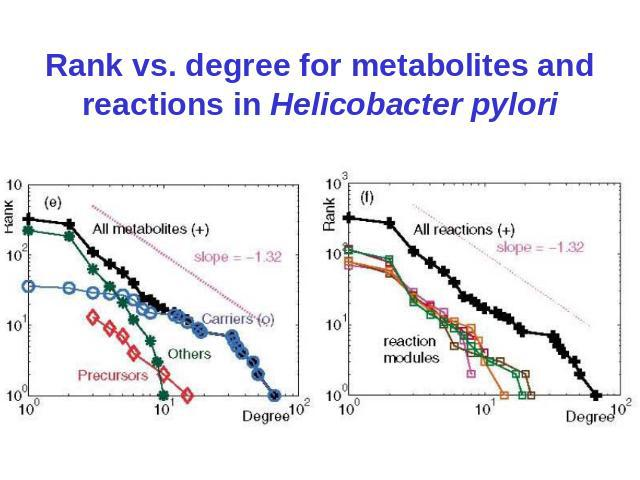 Rank vs. degree for metabolites and reactions in Helicobacter pylori