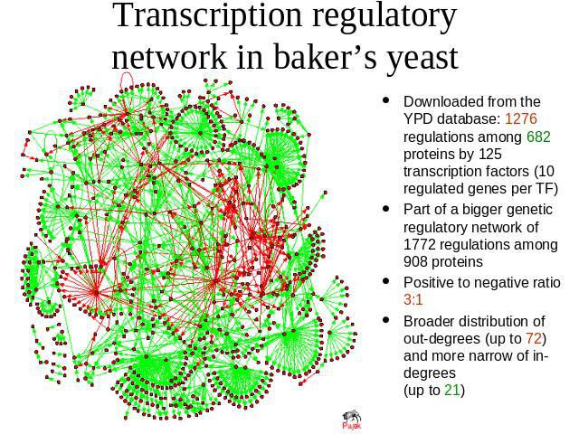 Transcription regulatory network in baker's yeast Downloaded from the YPD database: 1276 regulations among 682 proteins by 125 transcription factors (10 regulated genes per TF) Part of a bigger genetic regulatory network of 1772 regulations among 90…