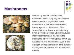 Mushrooms Everybody has his own favourite mushroom fields. They say you can find