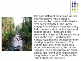 They are different these pine-woods. The Varlamovo Pine-Forest is surrounded by