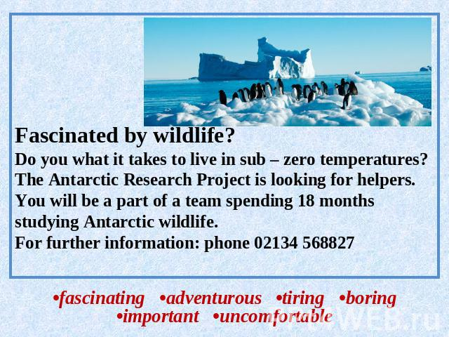 Fascinated by wildlife?Do you what it takes to live in sub – zero temperatures?The Antarctic Research Project is looking for helpers.You will be a part of a team spending 18 months studying Antarctic wildlife.For further information: phone 02134 568…