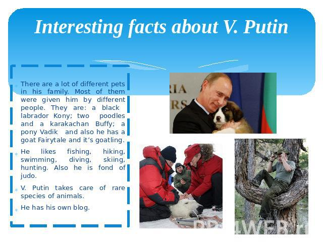 Interesting facts about V. Putin There are a lot of different pets in his family. Most of them were given him by different people. They are: a black labrador Kony; two poodles and a karakachan Buffy; a pony Vadik and also he has a goat Fairytale and…