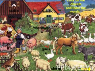 Click on the objects and learn the words stable cock hay hen farmer pig cat goat