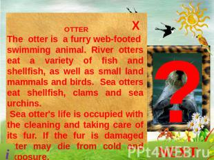 OTTER The otter is a furry web-footed swimming animal. River otters eat a variet