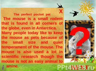 The perfect pocket pet The mouse is a small rodent that is found in all corners