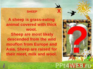 SHEEP A sheep is grass-eating animal covered with thick wool. Sheep are most lik