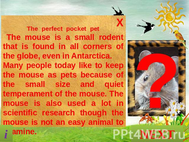 The perfect pocket pet The mouse is a small rodent that is found in all corners of the globe, even in Antarctica. Many people today like to keep the mouse as pets because of the small size and quiet temperament of the mouse. The mouse is also used a…