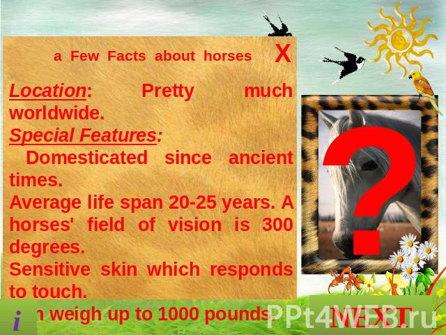a Few Facts about horses Location: Pretty much worldwide. Special Features: Domesticated since ancient times. Average life span 20-25 years. A horses' field of vision is 300 degrees. Sensitive skin which responds to touch. Can weigh up to 1000 pound…