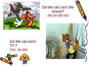 Did the cat catch the mouse? No,he did not. Did the cat watch TV ? Yes, he did.