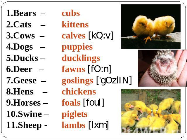 Bears – Cats – Cows – Dogs – Ducks – Deer – Geese – Hens – Horses – Swine – Sheep - cubs kittens calves [kQ:v] puppies ducklings fawns [fO:n] goslings ['gOzlIN] chickens foals [foul] piglets lambs [lxm]