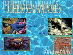 OTHER SEA ANIMALS sea star turtle crab cancer