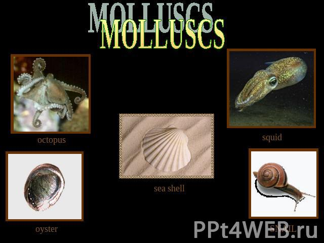 MOLLUSСS octopus squid sea shell oyster SNAIL