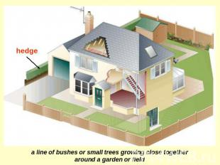 hedge a line of bushes or small trees growing close together around a garden or