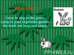 What Am I? I love to hop in the grass.I play in your vegetable garden.My teeth a