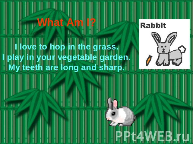 What Am I? I love to hop in the grass.I play in your vegetable garden.My teeth are long and sharp.