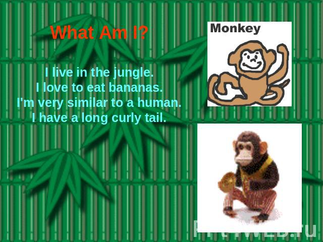 What Am I? I live in the jungle.I love to eat bananas.I'm very similar to a human.I have a long curly tail.