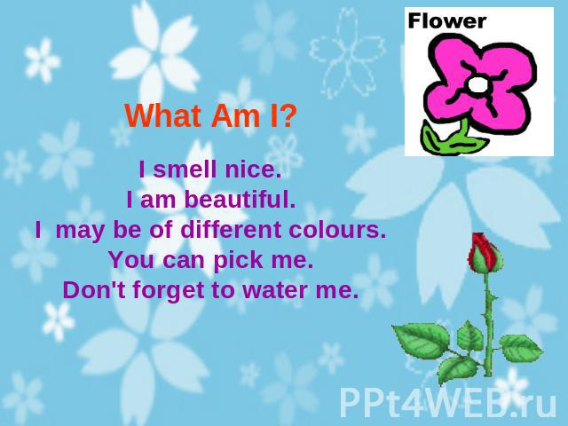 What Am I? I smell nice.I am beautiful.I may be of different colours.You can pick me.Don't forget to water me.